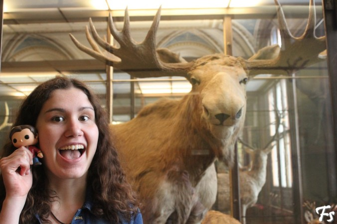 Frodo, Moose and a moose (Natural History Museum)