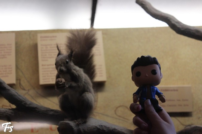 Squirrel and a squirrel (Natural History Museum)